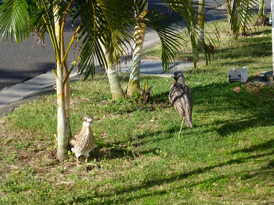 Burleigh Heads, Австралия: some of the locals