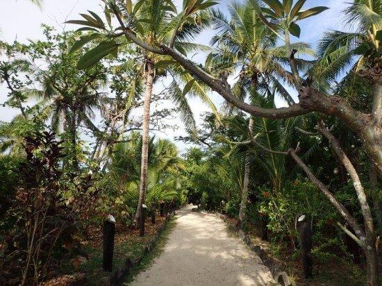 Foto de Navini Island