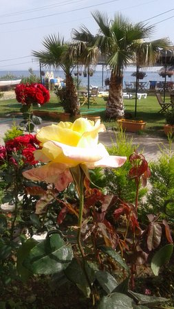 Karaburun, Turquía: Selfie of the roses