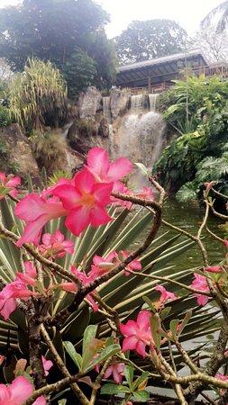 Jardin Botanique de Deshaies: photo6.jpg