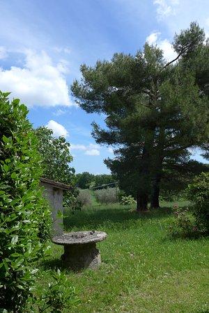 Villa Farinella: A corner from the garden