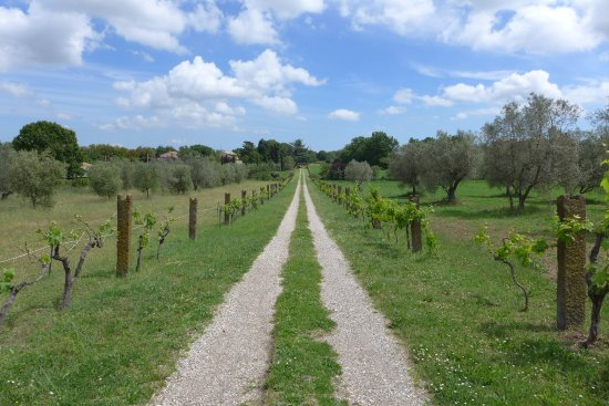 Villa Farinella: The grounds of the hotels are very extensive, perfect for walks