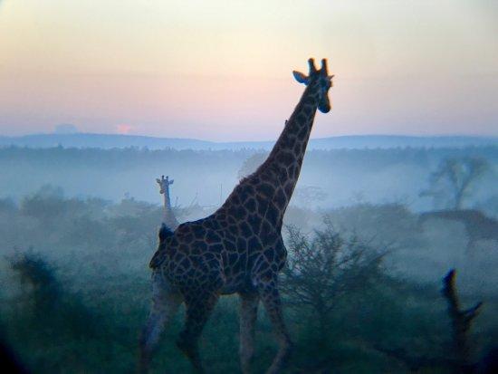 Marloth Park, Afrique du Sud : photo1.jpg
