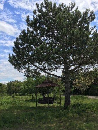 Ardeche, France: Le repos au pied de l'arbre