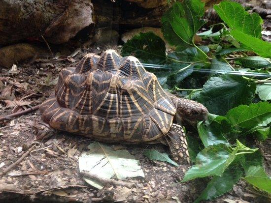 Mosman, Australia: Unusual Turtle