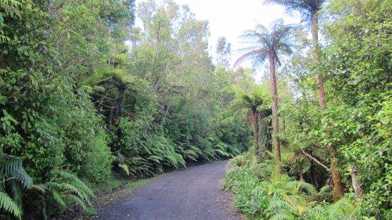 Patuha Lodge: driveway