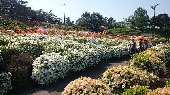 Sagae Park