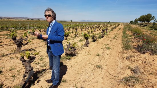 Valencian Cellar Tours: 100 year old bobal vines