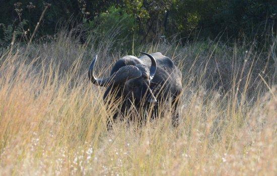 Gambar Mabula Private Game Reserve