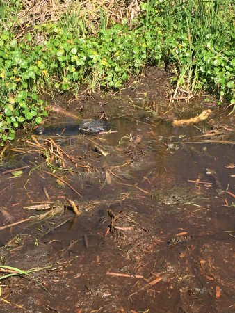 Florida Cracker Airboat Rides & Guide Service : photo2.jpg