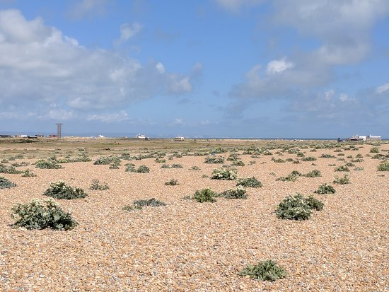 Dungeness, UK: IMG_20170520_130945_large.jpg
