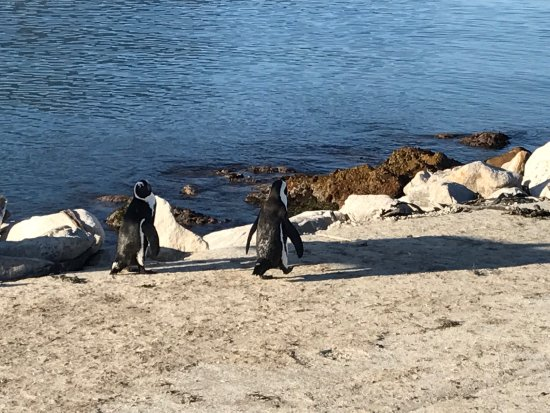 Betty's Bay, Sydafrika: photo4.jpg