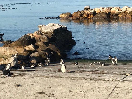 Betty's Bay, Sydafrika: photo5.jpg
