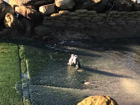 Betty's Bay, Südafrika: photo7.jpg