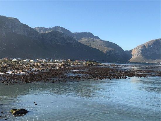 Betty's Bay, Südafrika: photo8.jpg