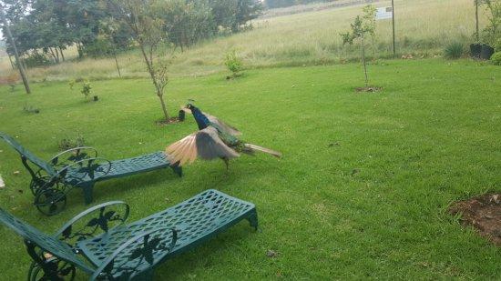 Kempton Park, South Africa: 20170310_082813_large.jpg
