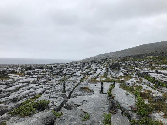 Burren Exposure : May 2017