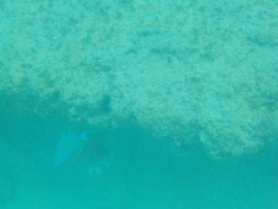 Cupecoy Bay Εικόνα