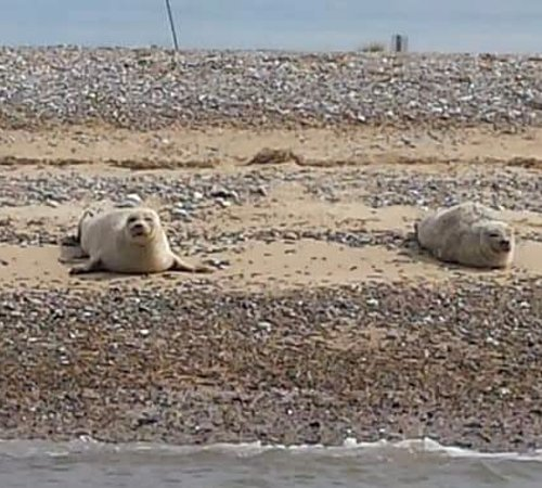 Morston, UK: Common Seals on Blakeney Point