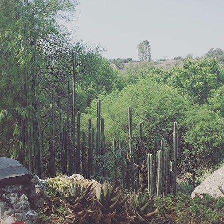 El Santuario, Mexico: Vista desde el restaurant