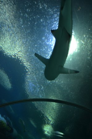 Bang Lamung, Thailand: Underwater World Pattaya