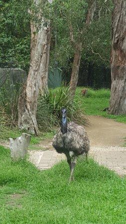 Currumbin, Australia: Ostrich