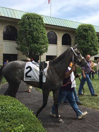 Keeneland: Visit the paddock and get a closeup look at the horses and jockeys. And bet big on the gray hors