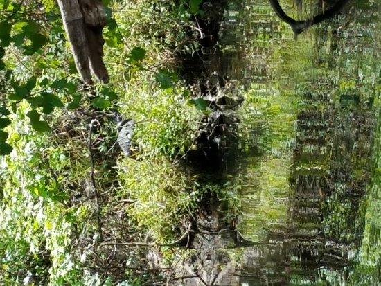 Wimauma, Флорида: 20170326_140151_large.jpg