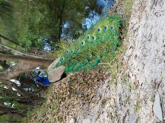 Wimauma, Флорида: 20170326_152813_large.jpg