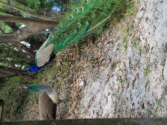 Wimauma, Флорида: 20170326_152814_large.jpg