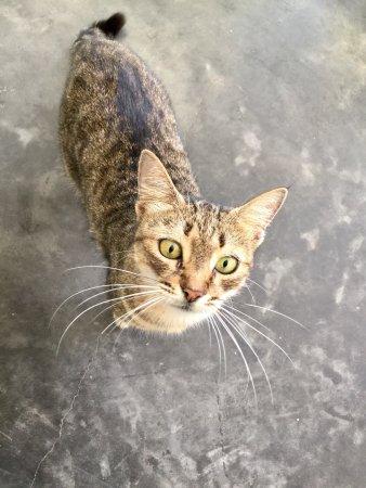 Au Cap, Seychelles: Guest cat!