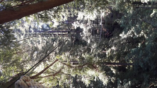 Mount Hermon, CA: 20170518_115522_large.jpg