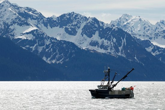 Millane's Serenity by the Sea Cabins: View from the beach in downtown Seward
