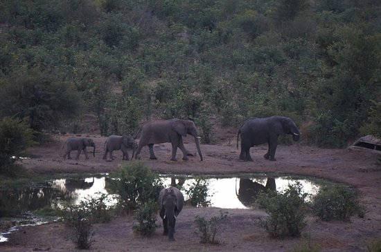 Victoria Falls Safari Club: Watering hole at sunset