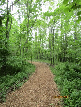 Oakdale, PA: The Woodland Trail - really well maintained mulch path.