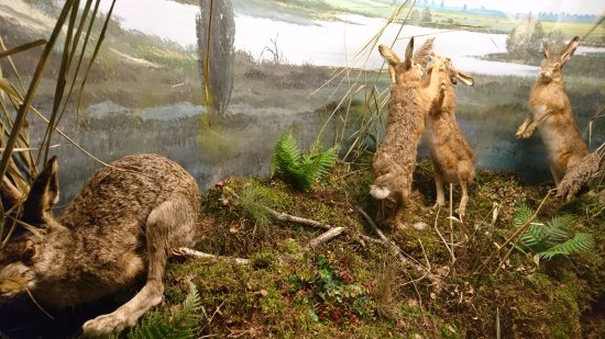 Holten, Países Bajos: diorama of boxing hares