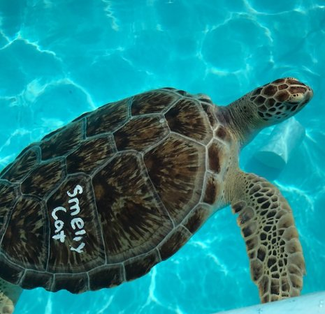 Rescuers are given the honor of naming the turtle  Some have funny