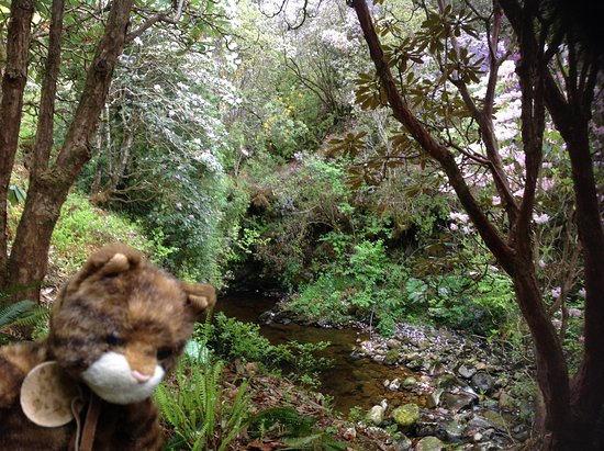 Inveraray, UK: Our mascot enjoying the stream