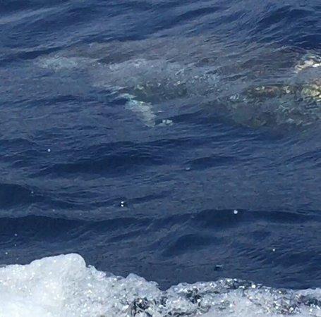 Sea Quest Snorkel Tours: photo3.jpg