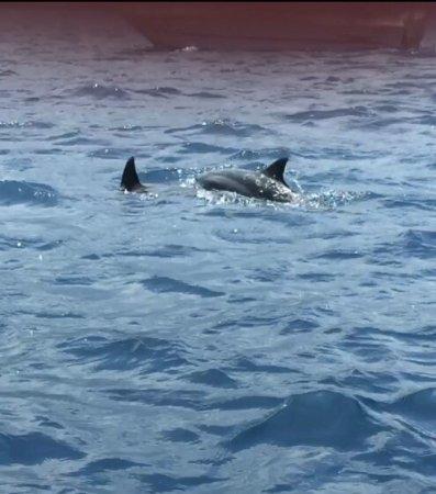 Sea Quest Snorkel Tours: photo4.jpg
