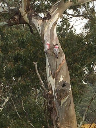 Angaston, Australia: photo1.jpg