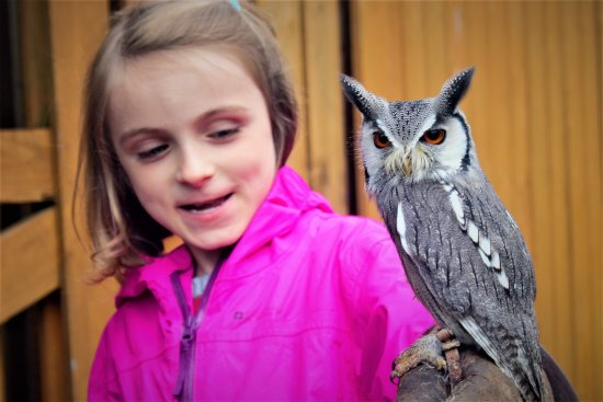 Strathblane, UK: annie with Owl