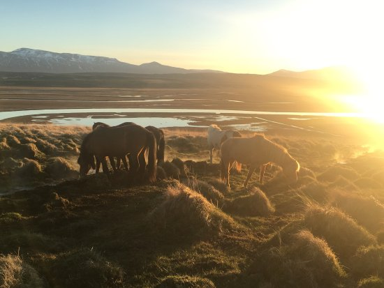 Saudarkrokur, Islandia: photo8.jpg