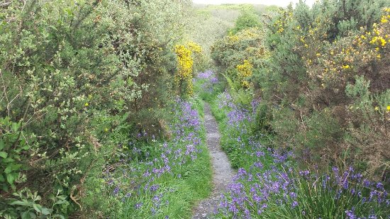 Bridgend, UK: The walk to one of the hides