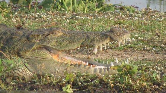 Uda Walawe National Park, سريلانكا: photo6.jpg