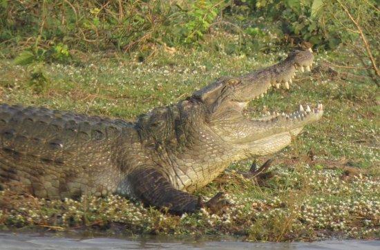 Uda Walawe National Park 사진