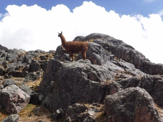 Lares Trek: Tour Guide