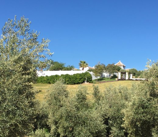 Alcalá del Valle, España: Nestled among the olive trees