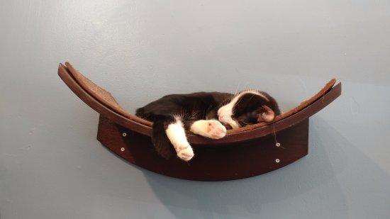 Brooklyn Cat Cafe