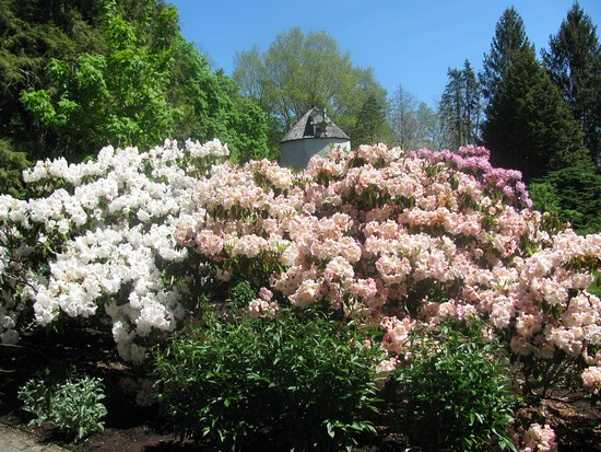 Sandwich, MA: Rhododendrons 2